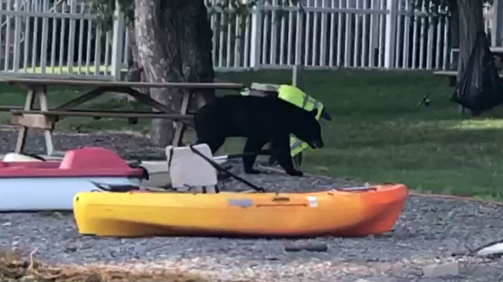 Another bear sighting at Keuka Lake