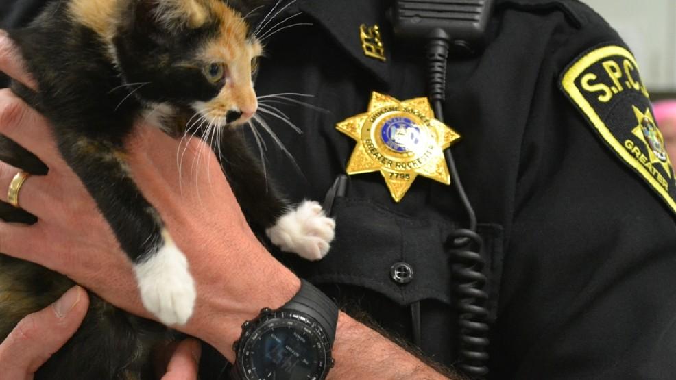 Stolen 10-week-old kitten located by Lollypop Farm | WHAM