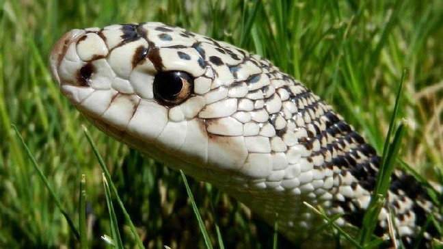 Fairport man sentenced for collecting snakes illegally | WHAM